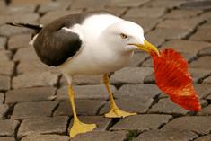 birdmuffin